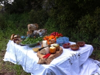 picnick-table